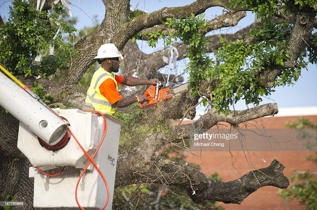 A member of the Asplundh tree service helps cut down an oak tree on April 23, 2013 at Toomer's Corner in Auburn, Alabama. Auburn University decided to remove the dying oaks after they were poisoned by a rival fan shortly after the 2010 Iron Bowl.