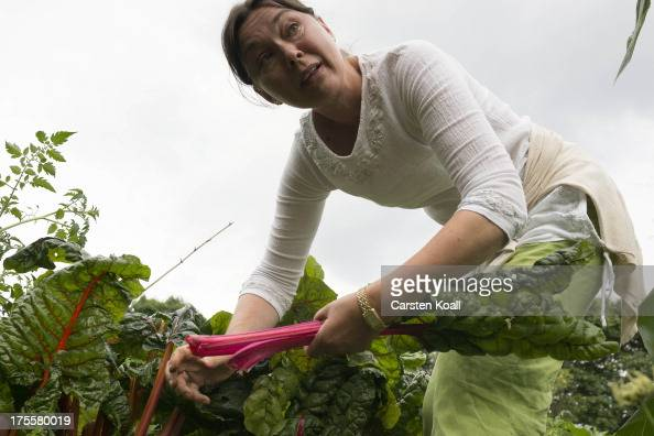 A member of the Bauerngarten Havelmathen gardening colony harvests rhubarb in her acreage in the Bauerngarten Havelmathen urban garden in Spandau...