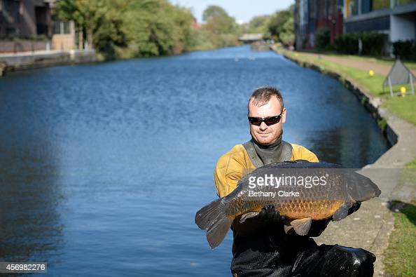 A member of the fish rescue team holds a 25 pound Carp before it is released into safe waters outside of the draining zone on Regent's Canal while...