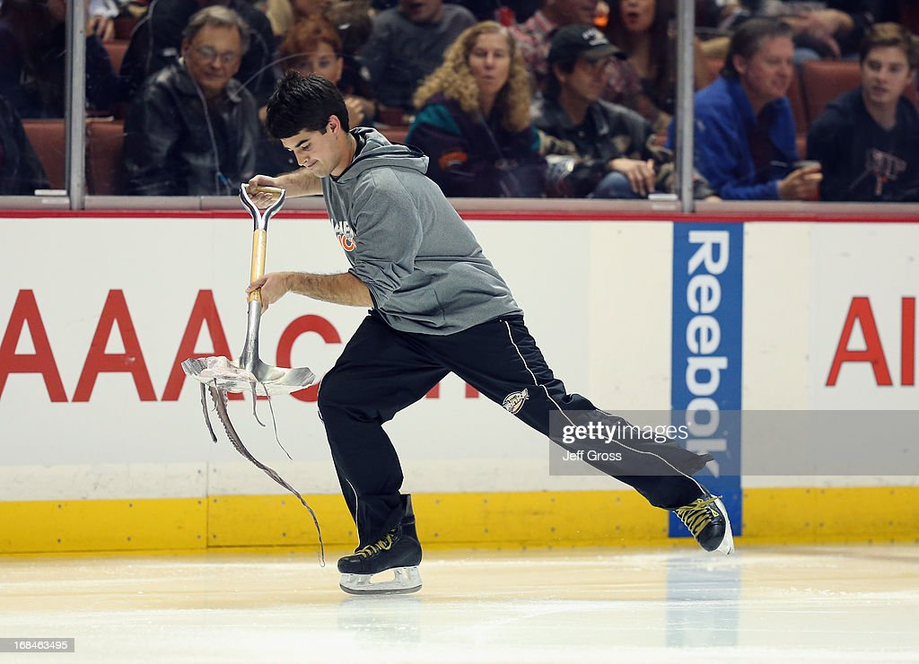 A member of the ice crew picks up an octopus tossed to the ice in Game Five of the Western Conference Quarterfinals between the Detroit Red Wings and the Anaheim Ducks during the 2013 NHL Stanley Cup Playoffs at Honda Center on May 8, 2013 in Anaheim, California.
