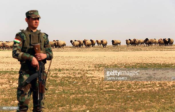 A member of the Kurdish forces looks at the remains of Yazidis killed by the Islamic State jihadist group as he searches for clues that might lead to...