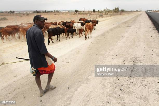 A member of the Maasai ethnic group walks with his cattle in search of grassland to graze his head on August 16 2009 in Kisaju Kenya As Kenya...