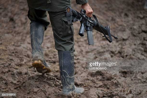 TOPSHOT A member of the Revolutionary Armed Forces of Colombia guerrilla carries his rifle at the 'Alfonso Artiaga' Front 29 FARC encampment in a...