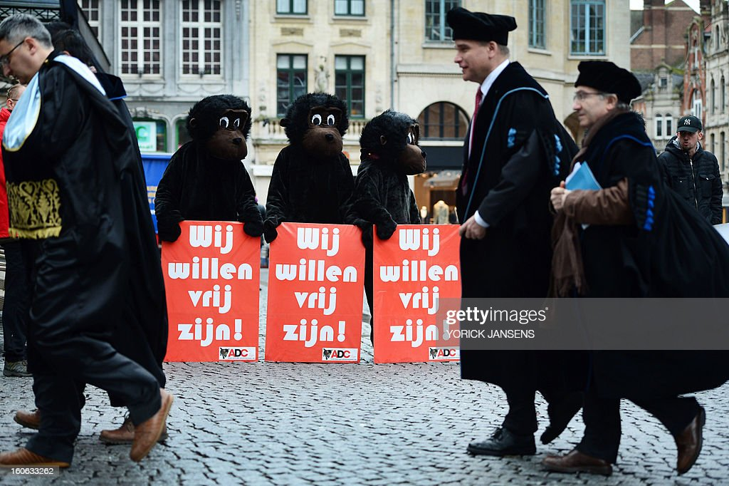 Members of anti animal-testing group CAV/ADC dressed as monkeys hold signs reading 'we want to be free' as they protest ahead of a ceremony for honorary degrees at the KU Leuven university, on the occasion of the University's Patron Saint's Day on February 4, 2013. BELGA