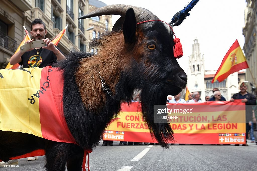 Members of 'La Hermandad de Caballeros Legionarios de Barcelona' (The Brotherhood of the Knights Legiona of Barcelona) take pictures of their mascot, a goat drapped with a Spanish flag, during a demonstration in support of the Spanish army on May 28, 2016 in Barcelona. / AFP / LLUIS