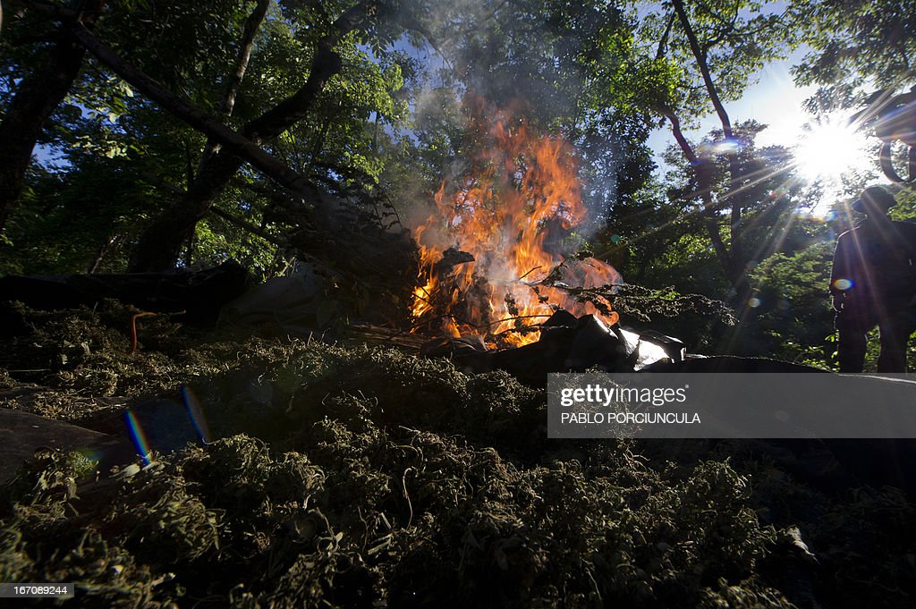 Members of Paraguayan SENAD (Antidrug National Agency) set a marijuana grower's improvised camp on fire into the woods in Pedro Juan Caballero (in the border with Brazil) 550 km northeast of Asuncion on April 19, 2013. AFP PHOTO/Pablo PORCIUNCULA