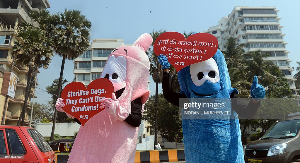 Members of People for the Ethical Treatment of Animals (PETA) India dressed as giant condoms hold signs reading 'Sterilise Dogs – They Can't Use Condoms!'during an awareness campaign in Mumbai on February 19, 2013. PETA volunteers handed out leaflets encouraging people to get their dog and cat companions sterilised and raise awareness about animal birth control. AFP PHOTO/Indranil MUKHERJEE