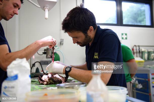 Members of staff of the veterinary clinic at the Zooparc of Beauval operate on a bird on June 23 in SaintAignansurCher The Beauval zoo inaugurated on...