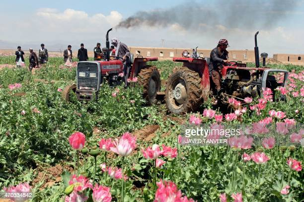 Members of the Afghan security force use tractors to destroy an illegal poppy field in Maiwand district of Kandahar province on April 19 2015 AFP...