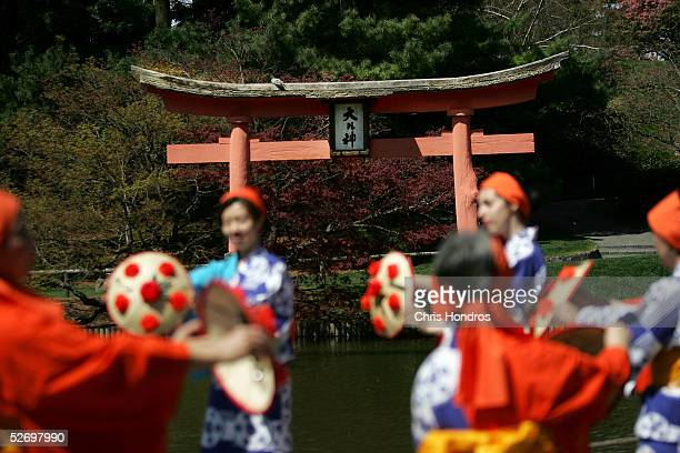 Members of the Japanese Folk Dance Institute of New York perform a traditional spring dance at the Brooklyn Botanic Garden April 26 2005 in the...