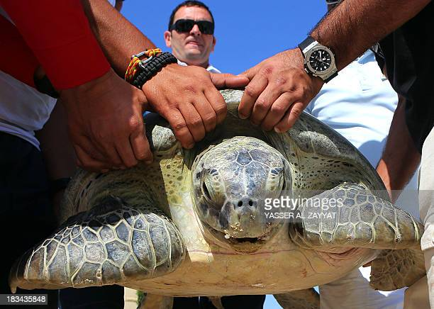 Members of the Kuwait Environment Protection Society ready to release a green sea turtle at the Jumairah Beach Hotel and Spa in Kuwait City on...