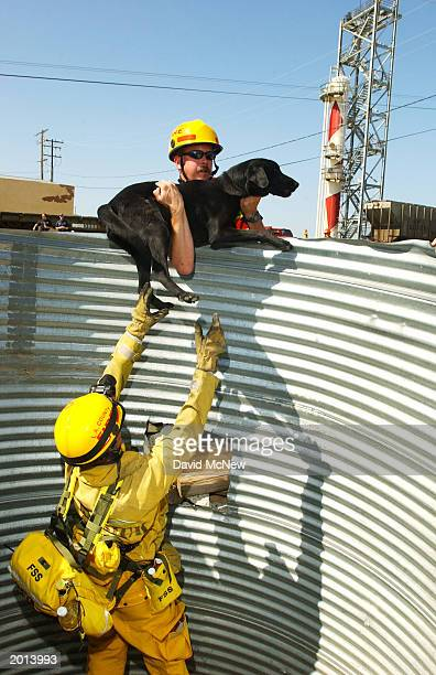 Members of the Los Angeles County Fire Department's Urban Search and Rescue team rescue a search dog from a hole that it ambitiously jump into while...