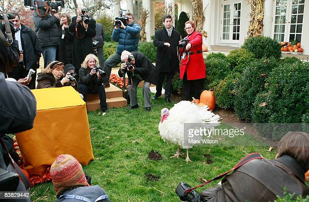 Members of the media gather around a turkey before US President George W Bush pardons the turkey named Pumpkin during the annual White House Turkey...