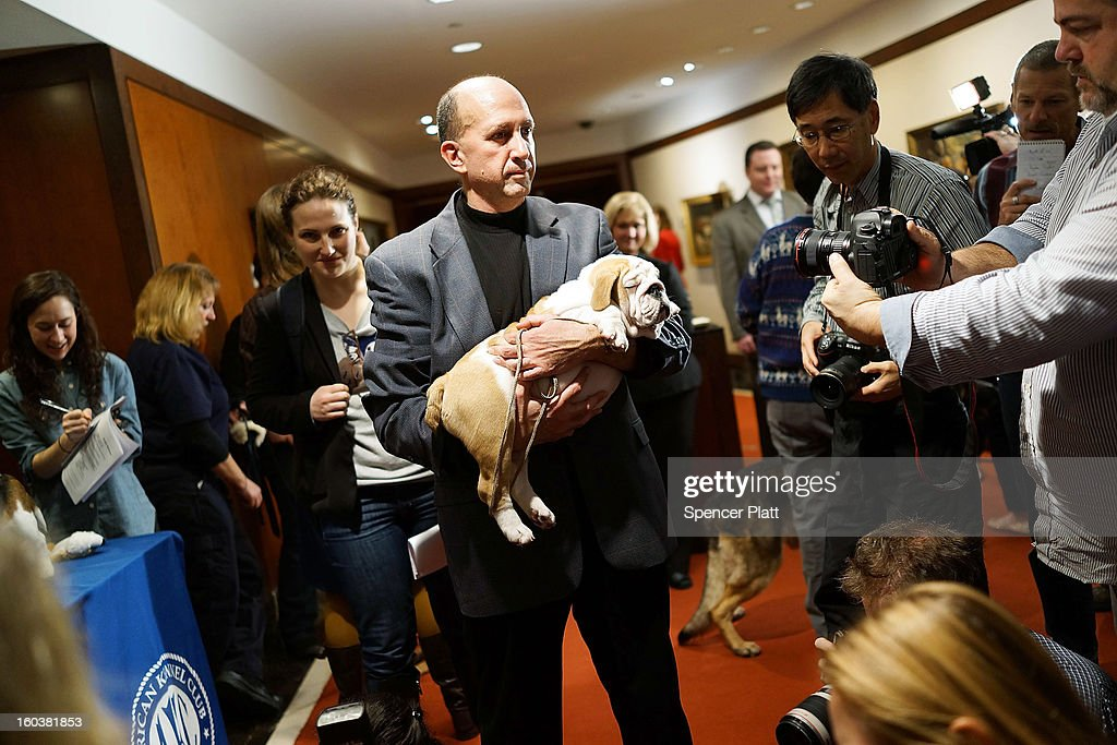 Members of the media speak and photograph dog owners following a news conference by the American Kennel Club to discuss the release of the club's annual list of the most popular dog breeds in the U.S., on January 30, 2013 in New York City. The club says that for the 22nd straight year the Labrador Retriever is the nation's most popular dog followed by the the German Shepherd.