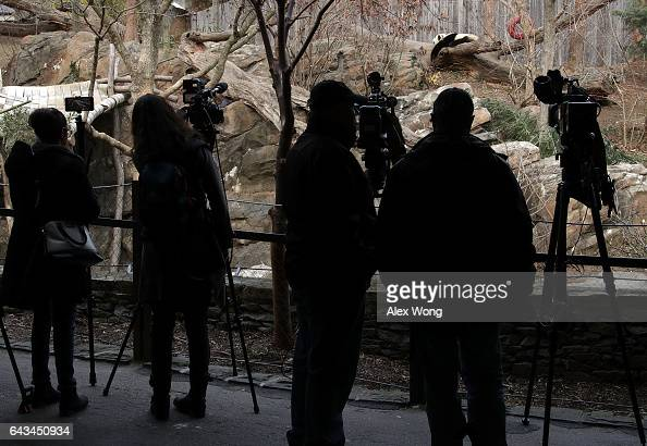 Members of the news media gather in front of the outdoor habitat of Giant panda Bao Bao to cover her departure for China at the Smithsonian's...