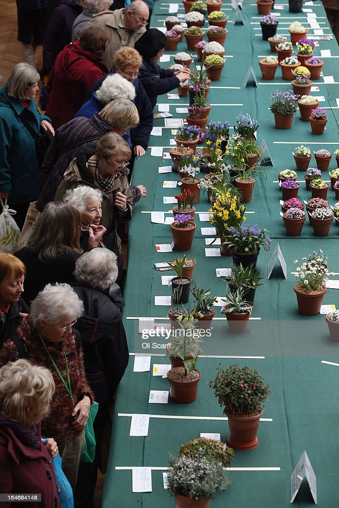 Members of the public admire the plants on display at the RHS Great London Plant Fair on March 26, 2013 in London, England. The fair takes place in the RHS Horticultural Halls on March 26-27, 2013 and features numerous botanical displays, advice from the RHS, Alpine Garden Society stalls and the results of the 'Early Daffodil and Hyacinth Competition'.