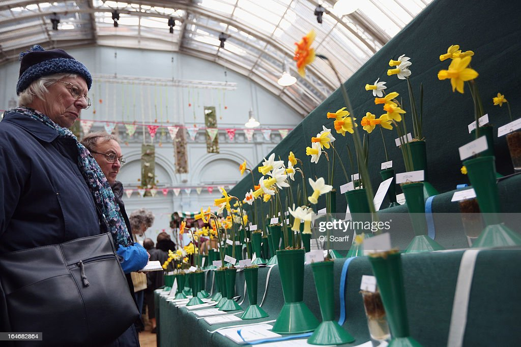 Members of the public admire the results of the 'Early Daffodil and Hyacinth Competition' on display at the RHS Great London Plant Fair on March 26, 2013 in London, England. The fair takes place in the RHS Horticultural Halls on March 26-27, 2013 and features numerous botanical displays, advice from the RHS, Alpine Garden Society stalls and the results of the 'Early Daffodil and Hyacinth Competition'.