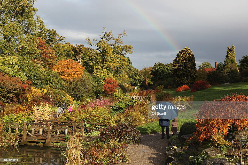 Members of the public admire trees displaying their autumn colours at the Royal Horticultural Society Garden Wisley on October 26, 2011 in Wisley, England. Many deciduous trees have now changed colour as they begin to shed their leaves for Autumn. An extended period of leaf colour change has come about this year due to a warm, dry Spring prompting an early growth spurt and a premature colour change.