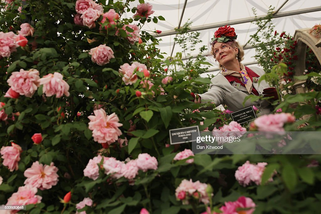 Members of the public enjoy the gardens at the 2016 Chelsea Flower Show at Royal Hospital Chelsea on May 24, 2016 in London, England. The show, which has run annually since 1913 in the grounds of the Royal Hospital Chelsea, is open to the public from 24-28 May.