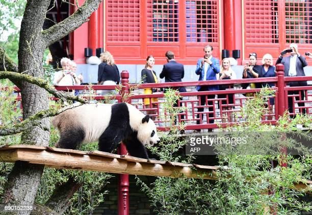 Members of the public take photos of giant panda Wu Wen during the official opening of the panda base Pandasia at the Ouwehand Zoo in Rhenen on May...
