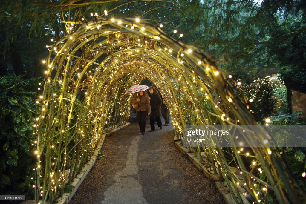 Members of the public walk through a tunnel of fairy lights which form part of the Christmas decorations at Waddesdon Manor on November 16, 2012 in Aylesbury, England. The East Wing and Bachelor's Wing of Waddesdon Manor have been elaborately decorated for Christmas in the theme of English traditions and literature. The light-artist Bruce Munro has also created two installations in the grounds of the manor. The Christmas decorations at Waddesdon Manor are open to the general public until January 1, 2013.