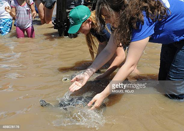 Members of the Sea Turtles Conservation Karumbe NGO release turtles back to the sea at a beach in Montevideo on November 15 2014 Five turtles were...