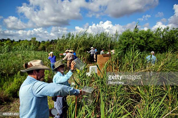 Members of the Texas State Soil and Water Conservation Board and other officials release Arundo wasps into a stand of carrizo cane as part of a...