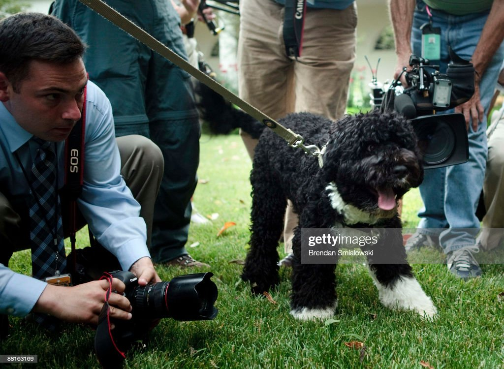 Members of the White House press corps surround the Obama family dog, Bo, in the Rose Garden of the White House during U.S. President Barack Obama's departure to Saudi Arabia for the first stop on a trip to the Middle East and Europe June 2, 2009 in Washington, DC. Bo, a Portuguese Water Dog, was a gift from Sen. Edward Kennedy (D-MA).