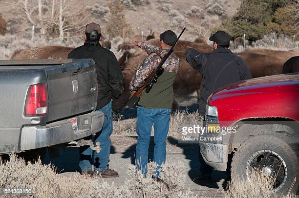 Memebers of the ShoshoneBannock tribe from Ft Hall Idaho prepare to harvest bison that have just crossed the border of Yellowstone National Park into...