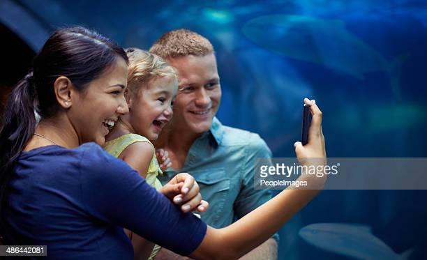 Des moments inoubliables à l'aquarium