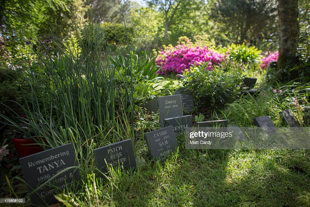 Pet Cemeteries Grow In Popularity Getty Images