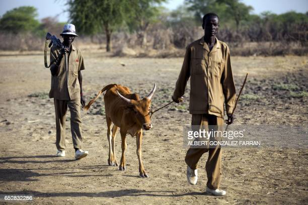 Men armed with a rifle lead a young cow past a dry field outside Ngop in South Sudan's Unity State on March 10 2017 The Norwegian Refugee Council...