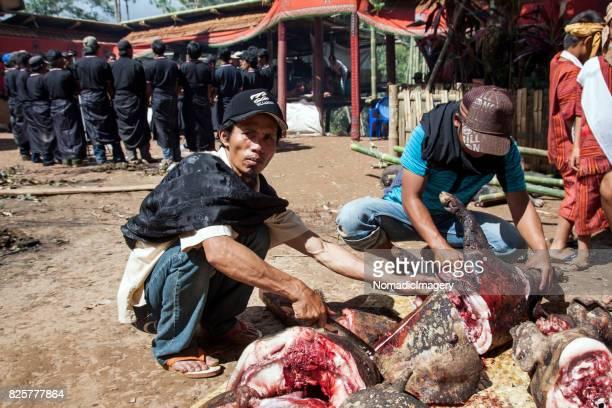 Men butchering pigs at Toraja sacrifice ceremony
