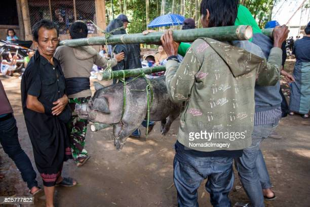 Men carrying trussed up hogs at animal sacrifice in Sulawesi