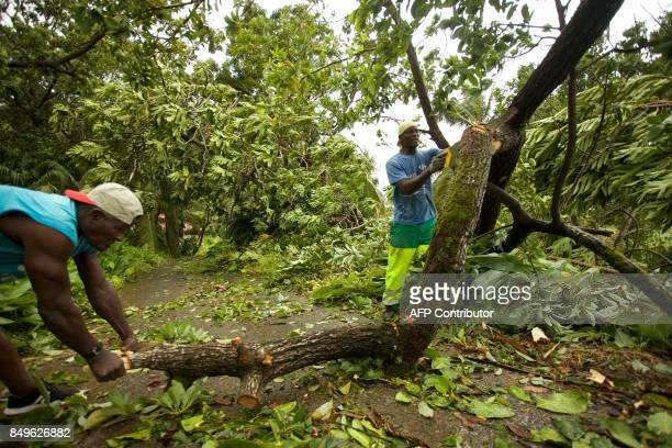 Men clear fallen tree branches in a small road of the village of Viard Petit Bourg near PointeaPitre on September 19 2017 in the French territory of...