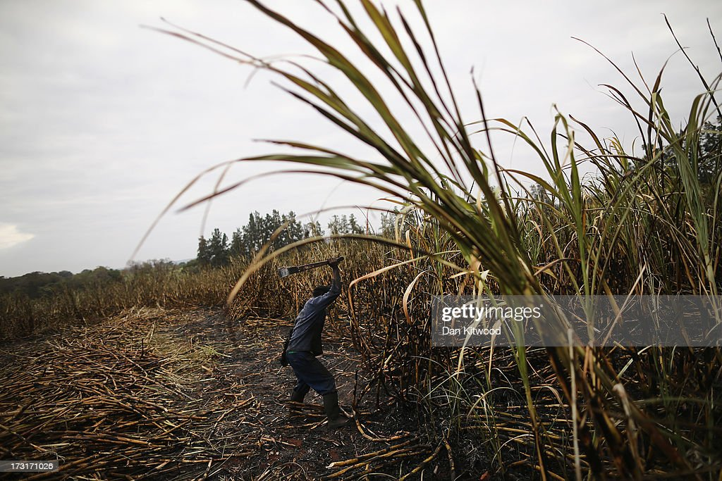 A men cuts sugarcane on a farm near the Kruger National Park on July 8, 2013 in Komatiepoort, South Africa. South Africa is the world's tenth largest producer of sugarcane with growers annually producing an average of 19.9 million tons of sugarcane per year. The participation of black farmers working on sugarcane production is constantly increasing through the development and empowerment of previously disadvantaged people within their communities.