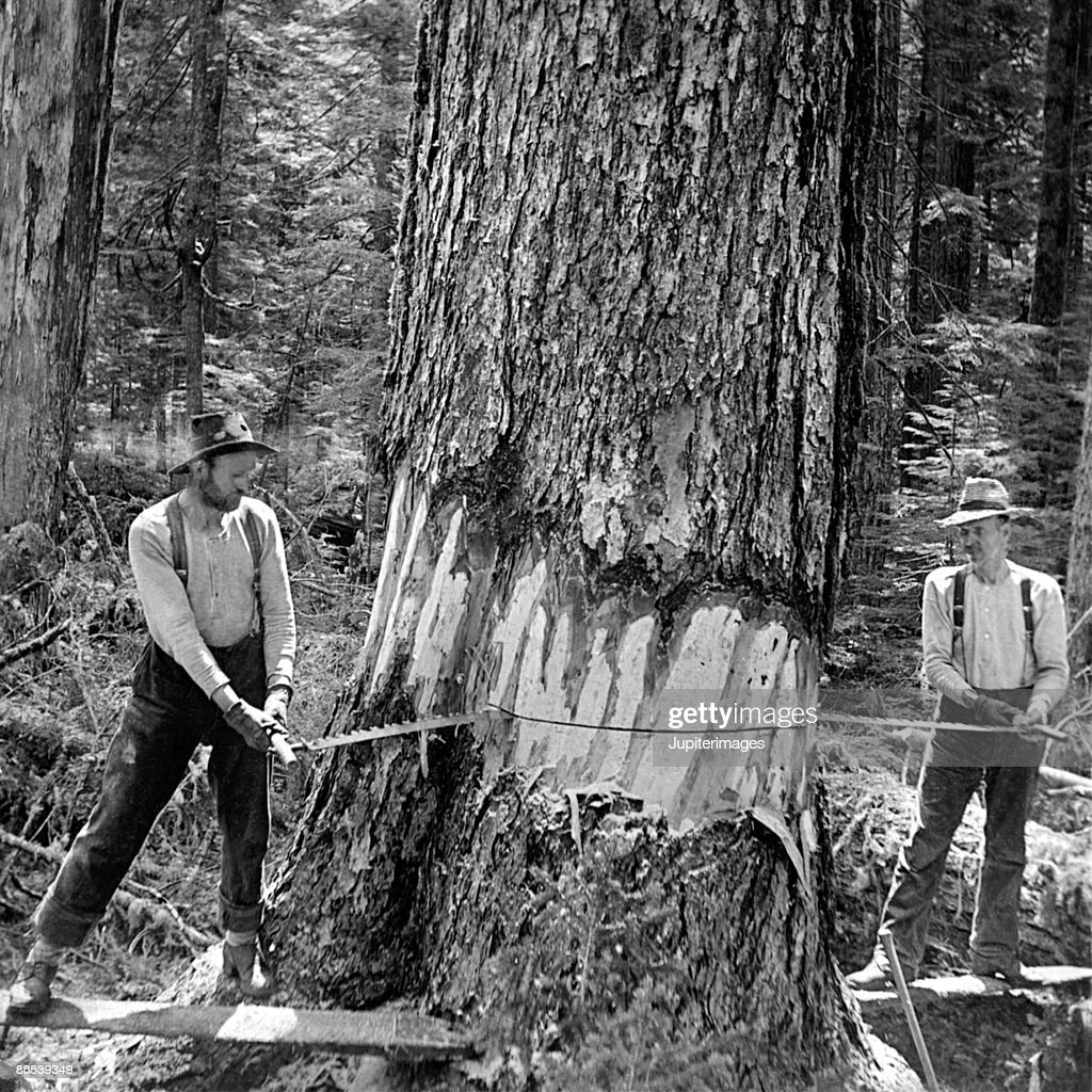 Men cutting down tree