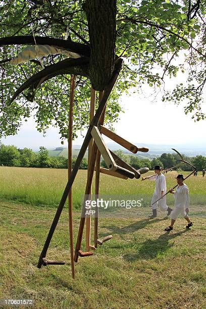 Men in folk costumes and are pictured with a scythes on their way to mow the meadows in Mala Vrbka 120 km southeast of Brno near the Slovakian border...