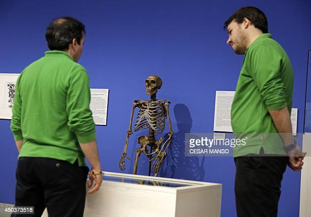 men look a scientificly based impression of the skeleton of a Neanderthal who lived some 50000 years ago by Italian scientist Fabio Fogliazza during...