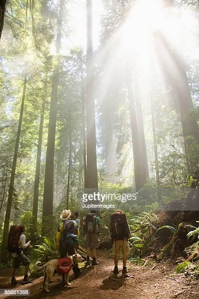 Men looking at sunlight through woods