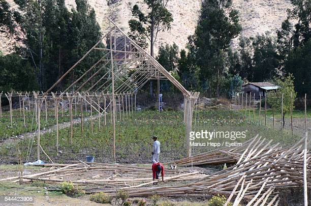 Men Making Greenhouse From Bamboo Stilts