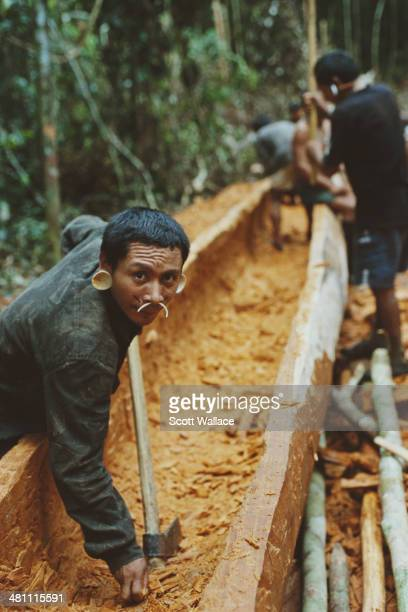 Men of the Matis people making a dugout canoe during an expedition led by Brazilian explorer social activist and ethnographer Sydney Possuelo in the...
