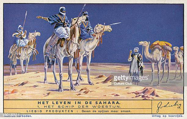 Men riding camels 'The Ship of the Desert' Life in the Sahara Liebig collectors' card 1943