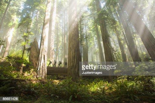 Men walking through forest