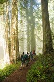Men walking through woods