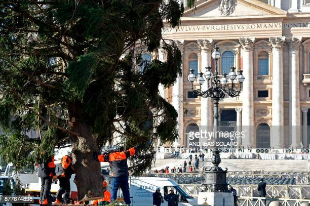 Men work on a Christmas tree arrived early today on a truck from Poland on November 23 2017 at St Peter's square in Vatican This year's the Christmas...