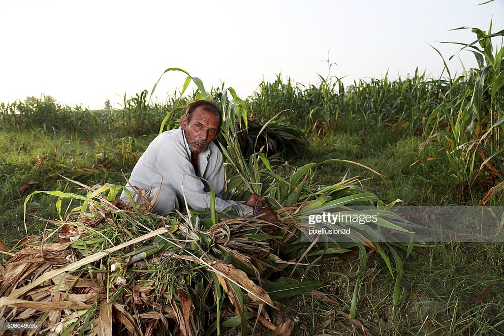 Men Working in the Field : Stock Photo