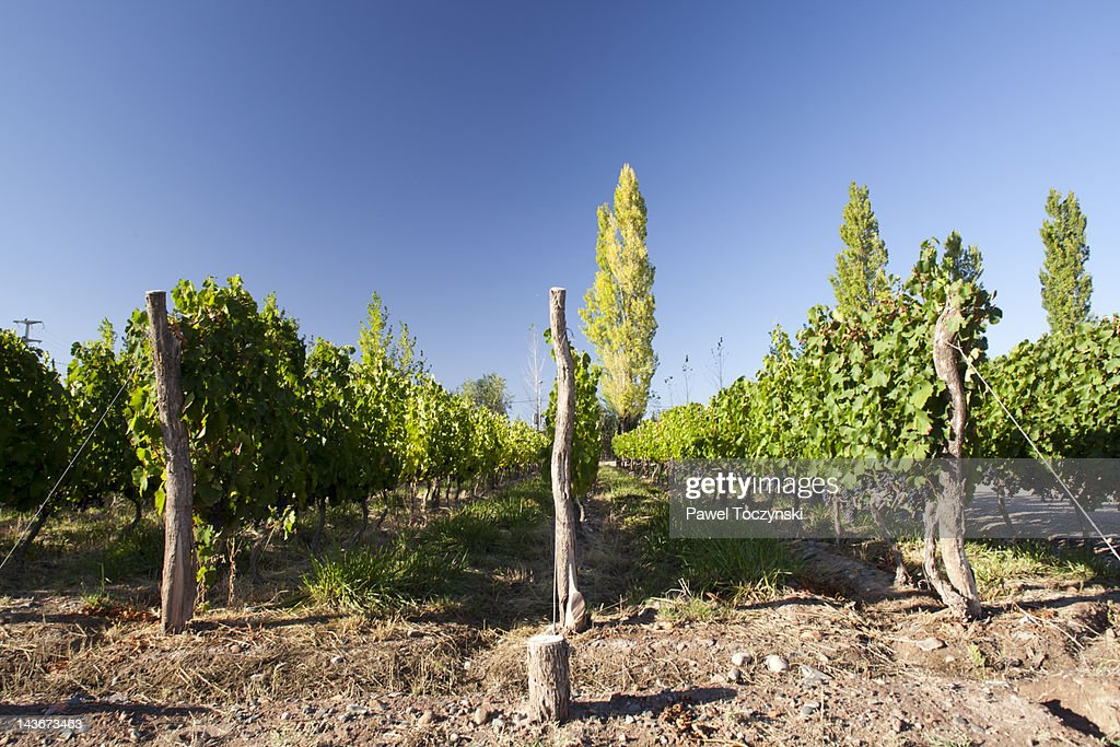Mendoza wineries, in the foothills of the Andes : Stock Photo