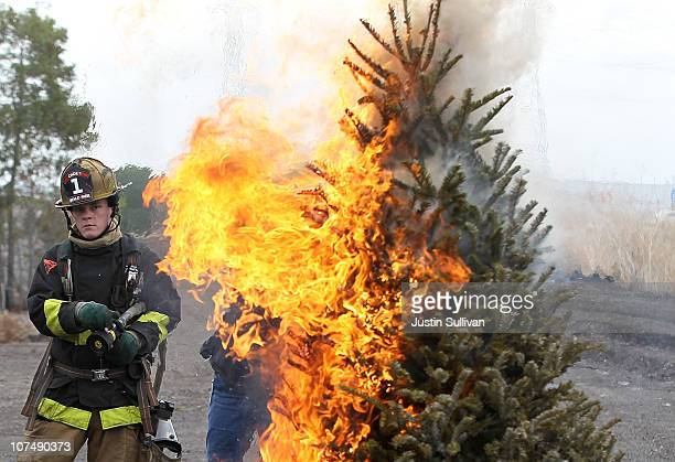 Menlo Park fire department cadet monitors a Christmas tree that is on fire during a holiday safety live fire demonstration on December 9 2010 in...