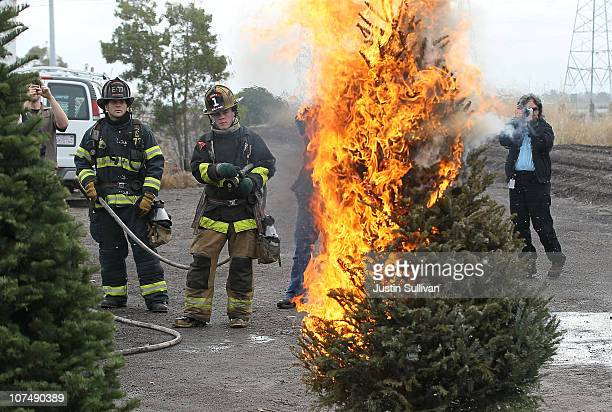 Menlo Park fire fighters monitor a Christmas tree fire during a holiday safety live fire demonstration on December 9 2010 in Menlo Park California...
